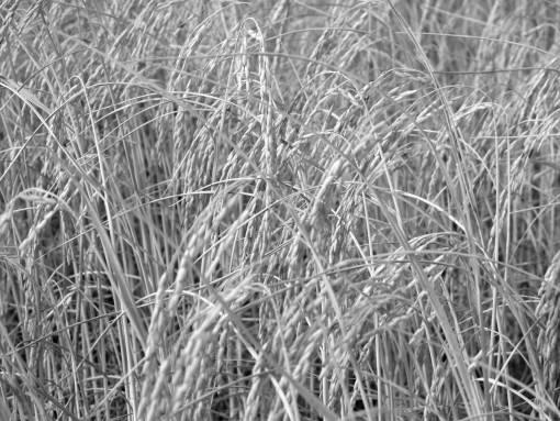 landscape  nature  growth  farm  lawn