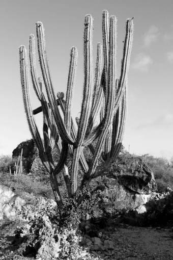 landscape  nature  prickly  cactus  flower