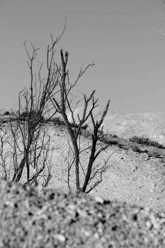 landscape  tree  nature  sand  rock