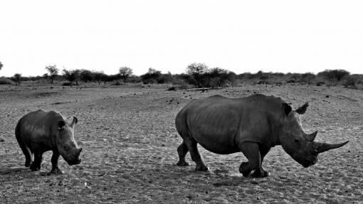 nature  adventure  animal  dry  wildlife