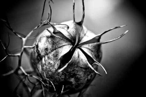 nature  black and white  leaf  flower  dry