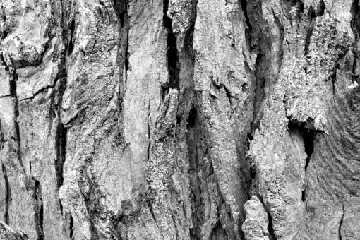 nature  branch  abstract  wood  texture