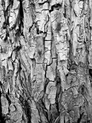 nature  forest  branch  structure  wood