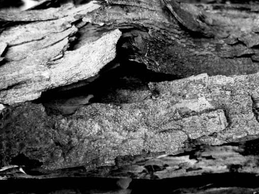 nature  rock  branch  wood  texture  leaf