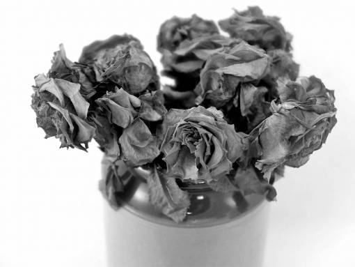 roses  blooms  dried flowers  texture  dry