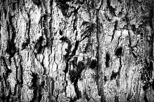tree  nature  branch  wood  ground  texture