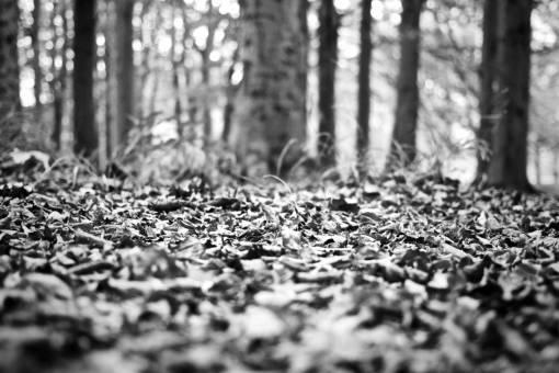 tree  nature  grass  branch  sunlight