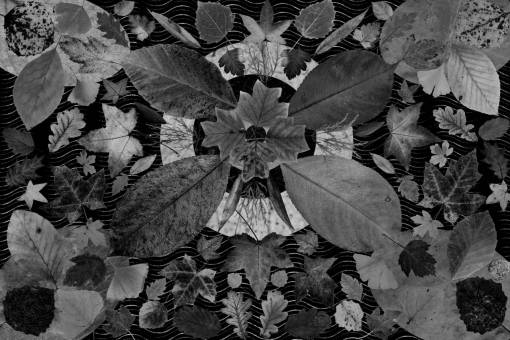 tree  plant  arid  flower  dry  pattern