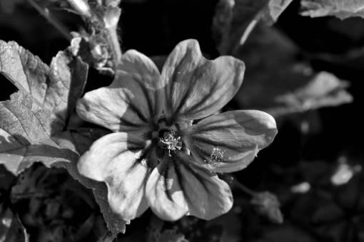 pistil leaf purple plant flower nature pink shrub flora garden flowers  plants