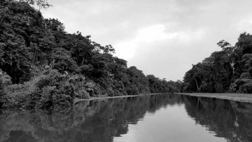 rainforest channel water river nature tropical wood landscape outdoors tree