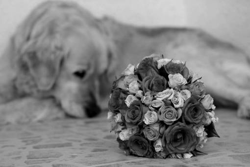 bouquet dog wedding flower arrangement rose pink roses romantic decoration