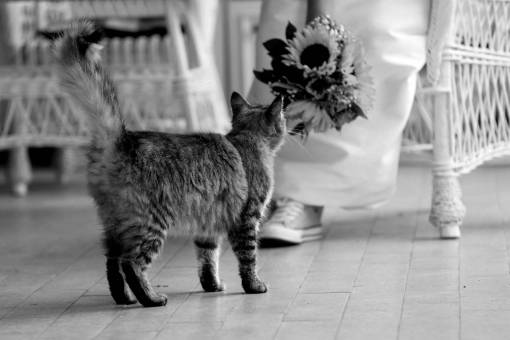 cat tabby porch bouquet bride furniture domestic kitten kitty pets
