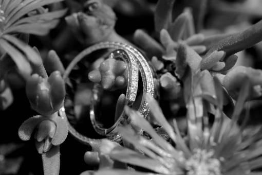platinum rings ring flower cactus leaf garden nature flora