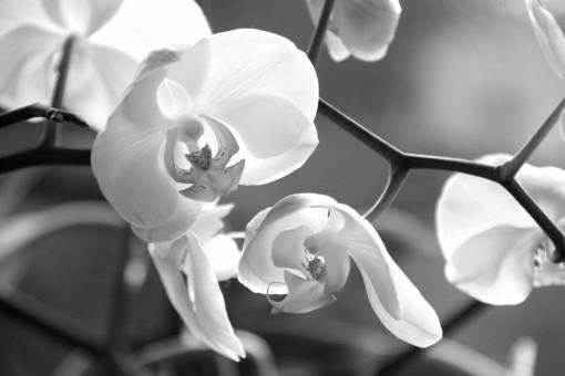 blossom  white  flower  petal  bloom  botany