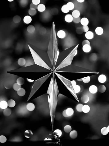 branch  light  bokeh  star  leaf  flower