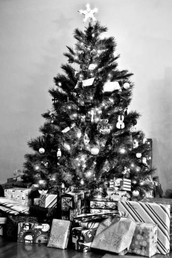 holiday  fir  christmas tree  christmas
