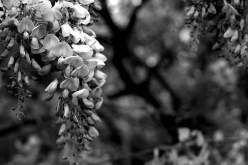 nature  branch  blossom  leaf  flower