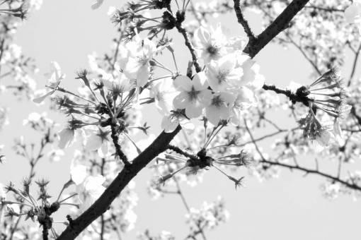 tree  branch  flower  food  spring  produce