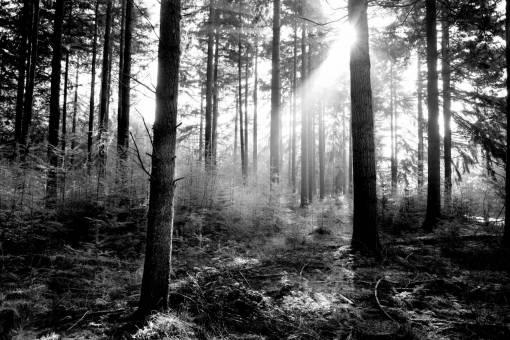 tree  nature  outdoor  wilderness  branch